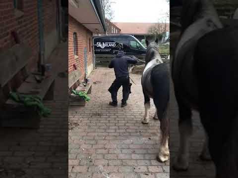 Auf pferd sex Heißes Paar