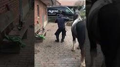 Sexy Dancer ❤️❤️❤️😂😂#reiter #sex#Pferde #tanzen #love#lustig