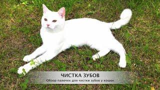Чистка зубов кошек и котов мятными палочками