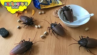 Insect and Bugs for Children
