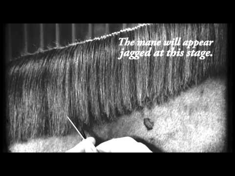 How To Cut a Mane Like a Pro