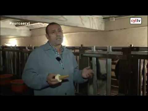 Ternera Blanca | Ternera de Ávila