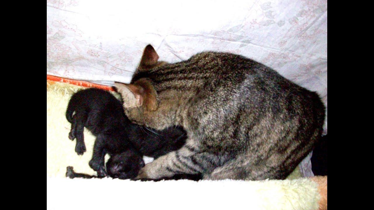 Как сделать кровать для котят своими руками 199