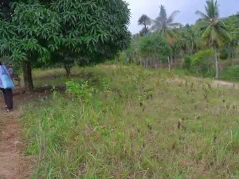 For Sale Agricultural Lot in Cagay Barili Cebu South Area: 40,394 sq.m