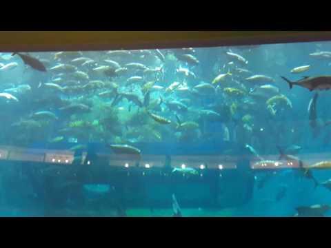 At Dubai mall