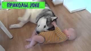 Хаски и малыш /  Husky and baby