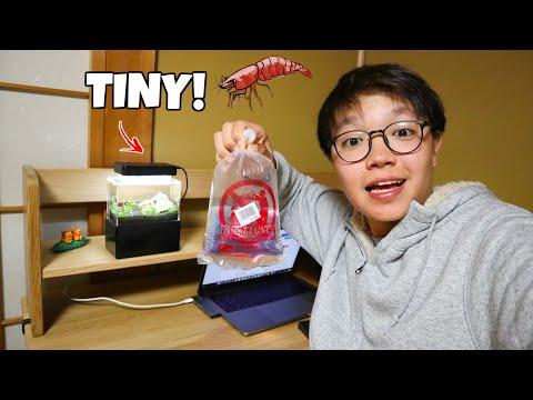 Adding SHRIMP To Worlds SMALLEST Aquarium!