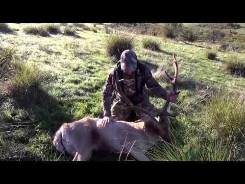 Bow Hunting Fallow Deer Australia