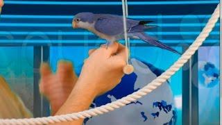 Как приручать попугая шаг первый.