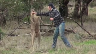 Man punches a kangaroo in the face to rescue his dog (Original) HD