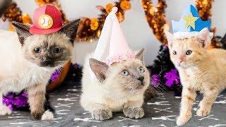 diy-halloween-hats-for-kittens