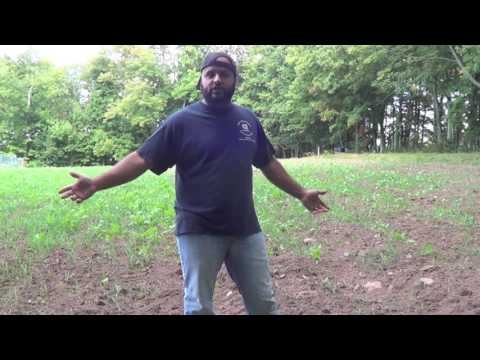 SEPT 16 2016 Pure Attraction Fall Food Plot Update Viewer Discretion Is Advised.