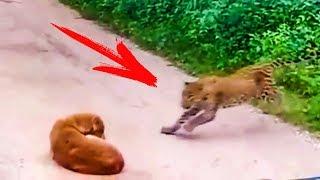 Гепард Внезапно Атаковал Собаку, но То Что Случилось Дальше Удивило Всех