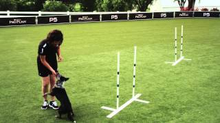 Dog Agility - Weave Poles - 2x2 - Pro Plan P5 Training