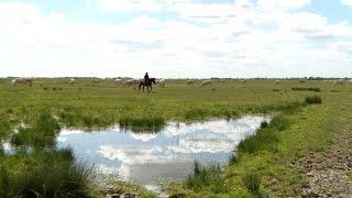 Vendée : une femme dans les marais