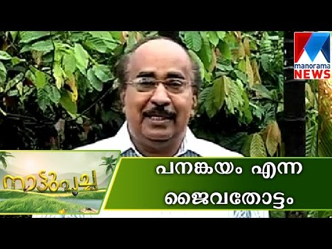 Panankayam the golden land of organic Farming | Manorama News