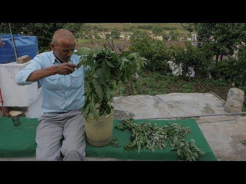 Biopesticide जैविक कीटनाशक: An organic and eco-friendly alternative to chemical pesticide