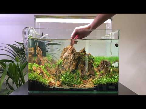 Scaper's Tank Aquascape Maintenance - Rock Cleaning and Plant Trimming