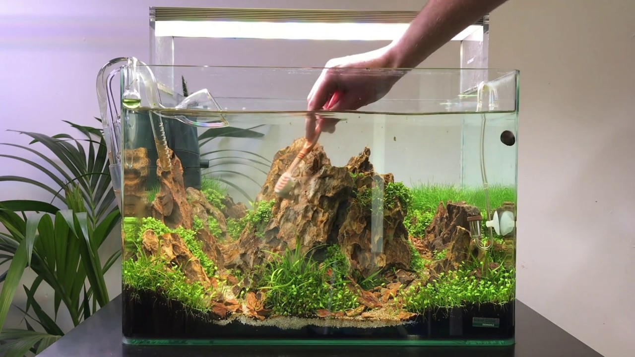 Scaper S Tank Aquascape Maintenance Rock Cleaning And Plant Trimming Youtube
