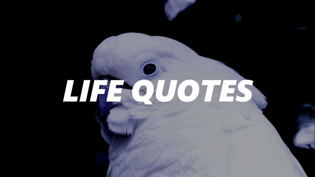 Top 10 Life Quotes Wisdom Fighters Youtube