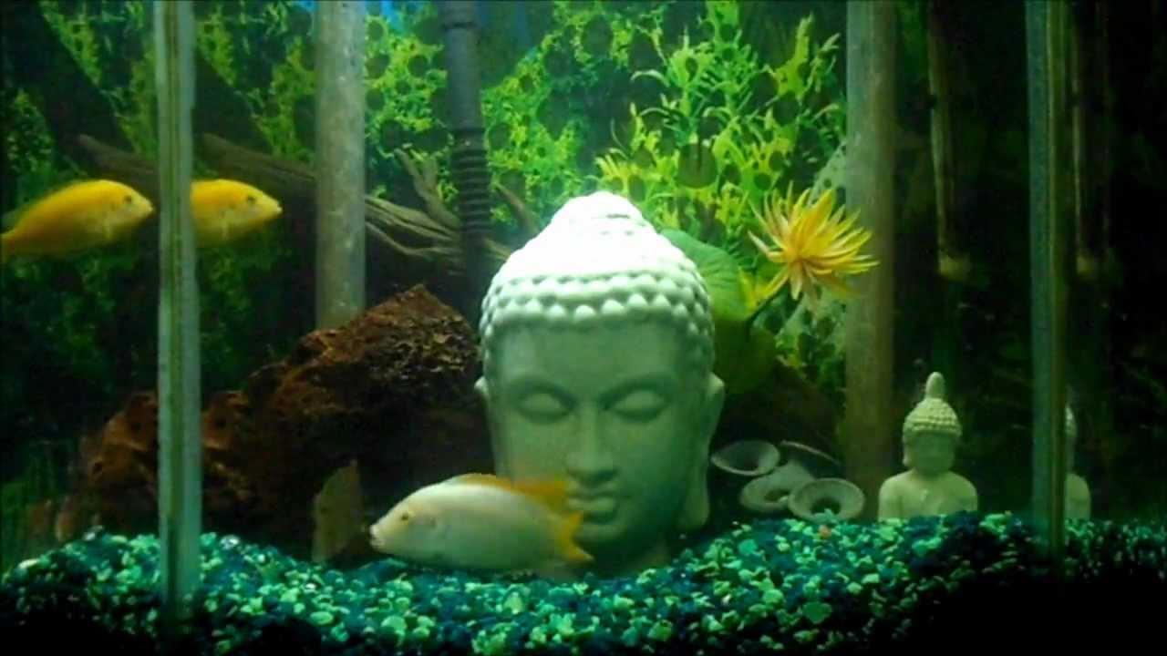 Zen buddha aquarium with relaxing water music youtube for Zen fish tank