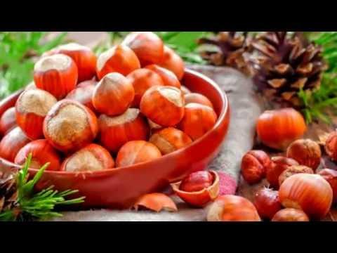 ЛЕСНОЙ ОРЕХ ФУНДУК ПОЛЬЗА | если съесть много фундука, чем полезен фундук, фундук полезные свойства