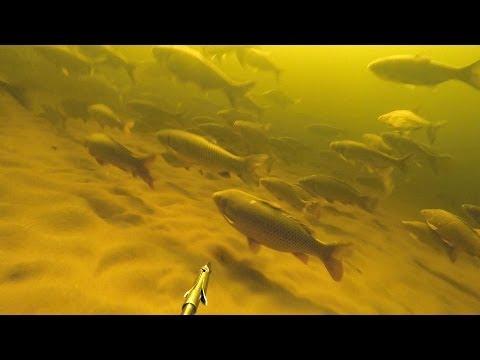 Подводная охота. Идеальные условия для подводной охоты.