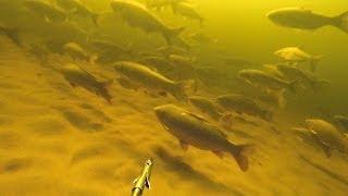 Подводная охота. Идеальные условия для подводной охоты.(Подводная охота. Чистая вода, гуляет рыба, о чем еще может мечтать подводный охотник? От такой подводной..., 2014-04-14T07:39:05.000Z)