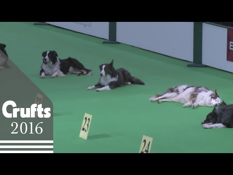 dog-obedience-championship---stays-|-crufts-2016