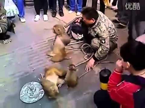 Vỡ Sọ Khỉ