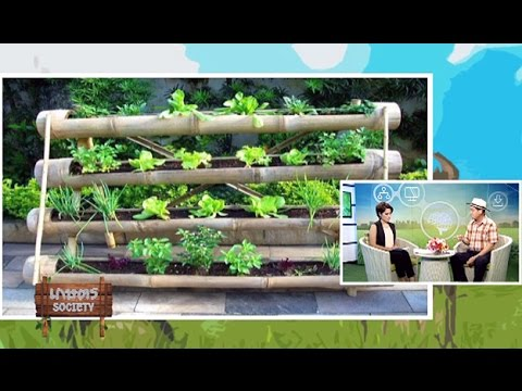 เกษตร Society 11/11/57 : วิธีการปลูกผักสวนครัวสำหรับทาวน์เฮ้าส์