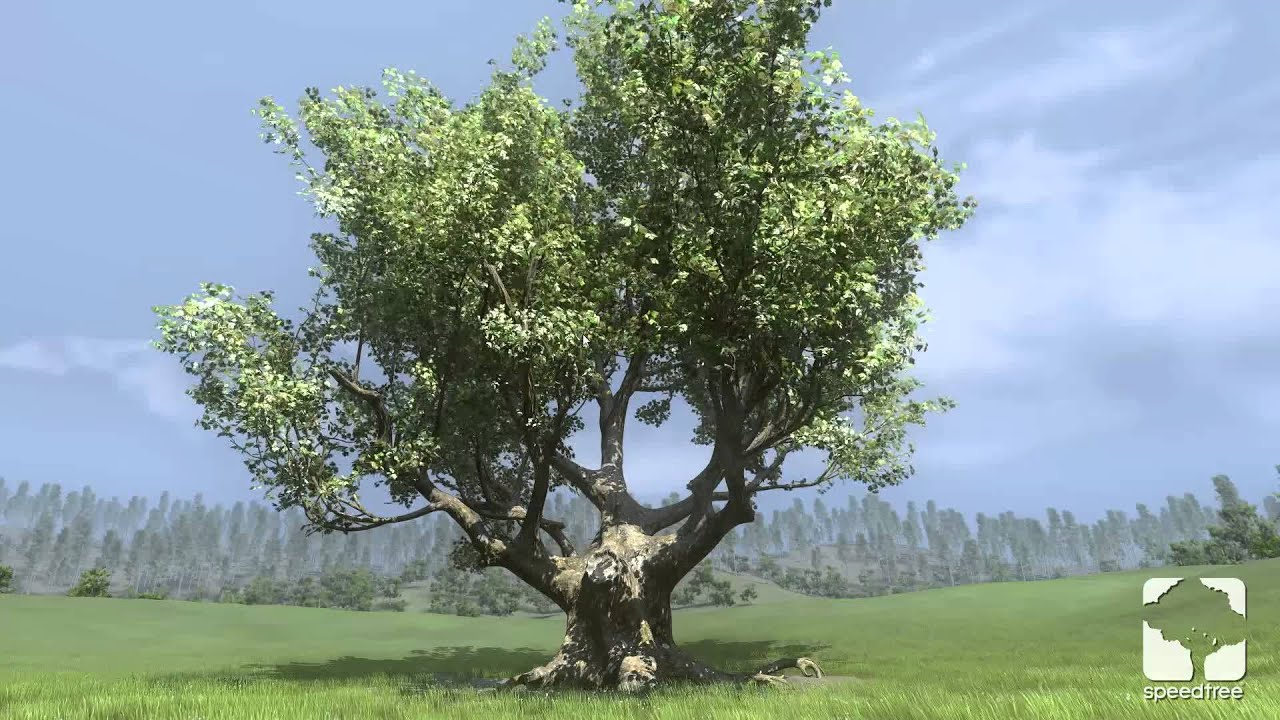 SpeedTree for Games 7 Rolling Wind