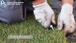 видео рулонного газона от