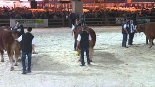 Concours de la race Limousine (3/4)