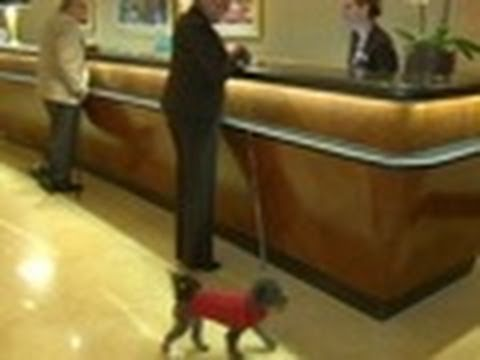Pet-friendly hotels: Advice | Consumer Reports