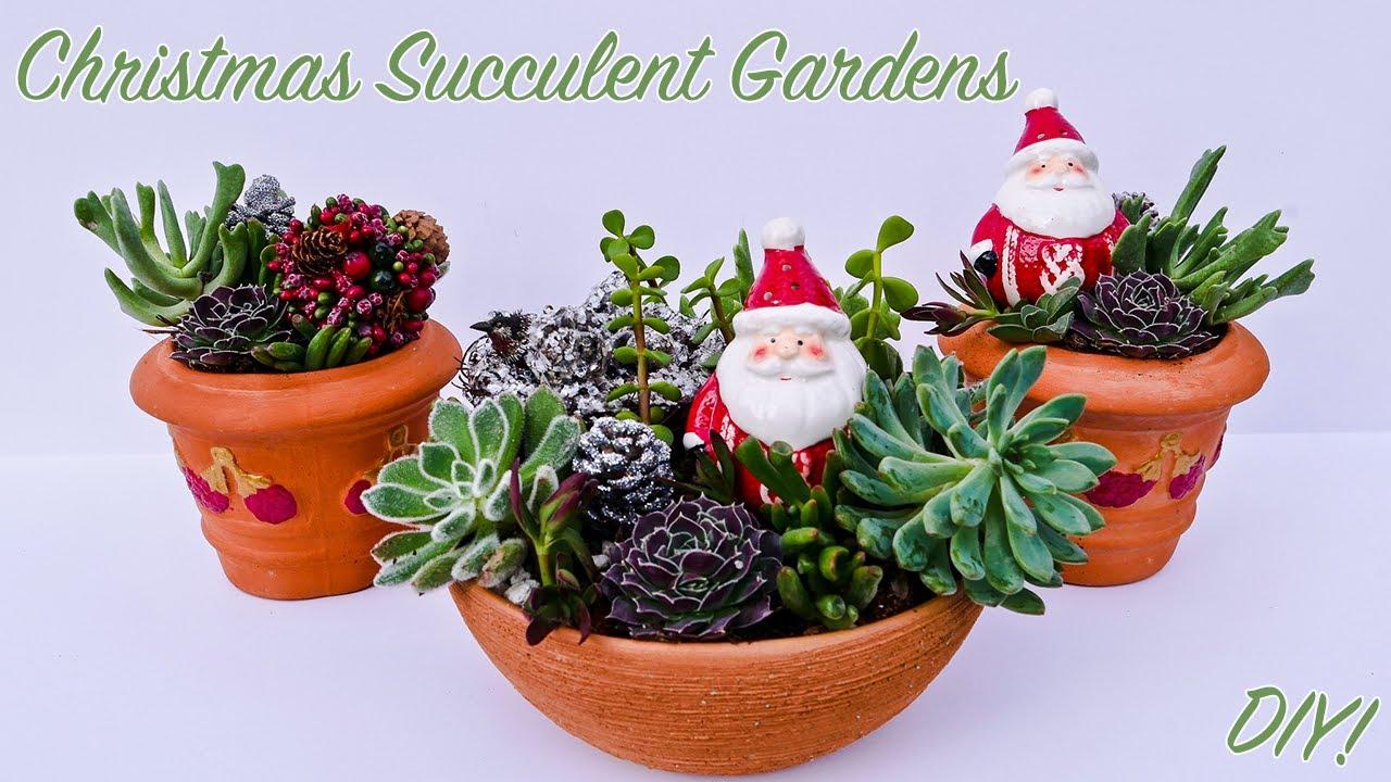 A Festive Succulent Garden Diy Joyusgarden Youtube