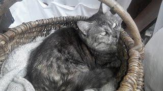 Как сделать кровать для кошки на балконе