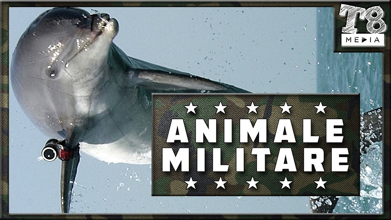 8 Animale Folosite in Armata