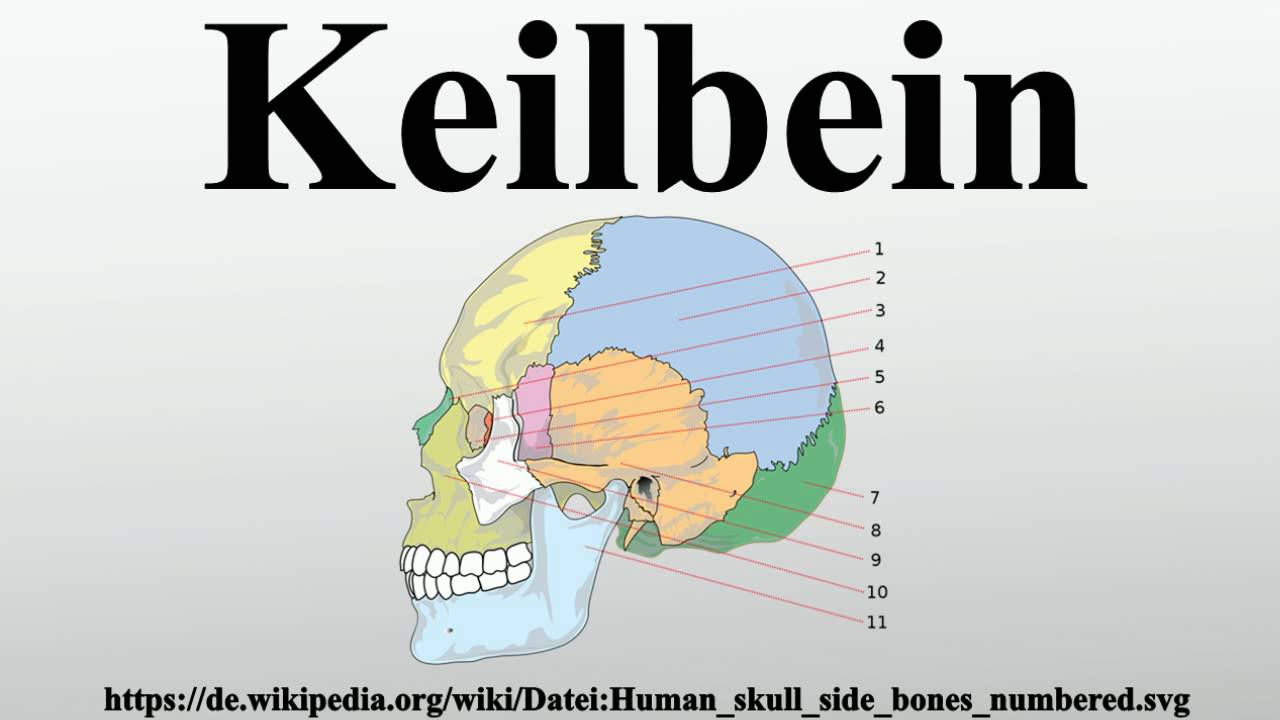 Keilbein - YouTube