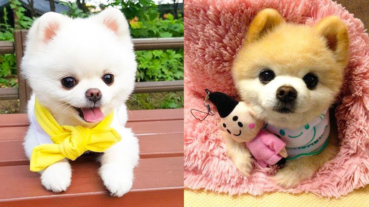 Aww ♥Cute Puppies Doing Funny Things 2020♥