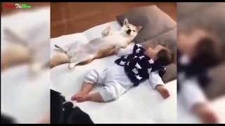 Top clip hài hước nhất 2018 / Top funny videos P9- Try not to laugh  what the wow