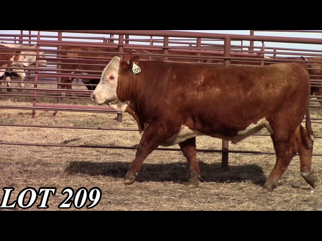 Mead Angus Farms Lot 209