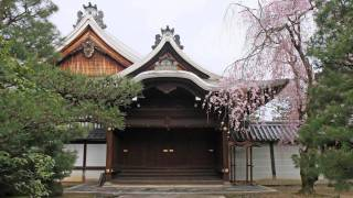 The four seasons in Kyoto(Japan),Spring(Cherry Blossoms) 【四季の京都、春・桜】