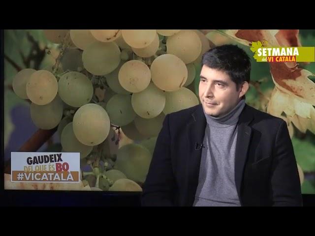 Entrevista a Salvador Puig, director general de l'INCAVI #SetmanaViCatalà #SetmanaVi