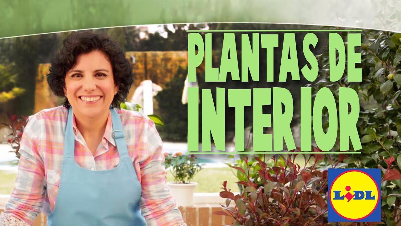 El cuidado de plantas de interior lidl jard n youtube for Modelos de jardines interiores