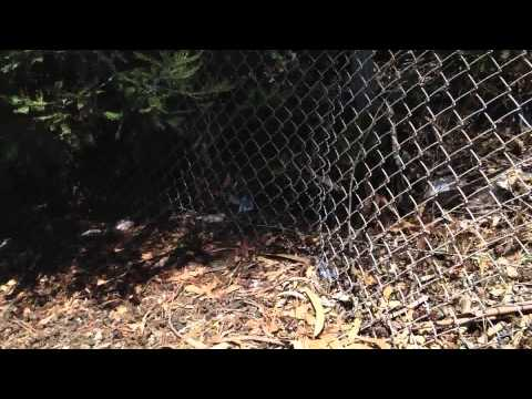 Trash on Stanley Ave Hwy 580