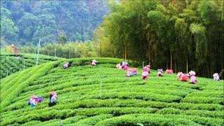 竹山八卦茶園 Bagua tea plantation , Taiwan 20130410