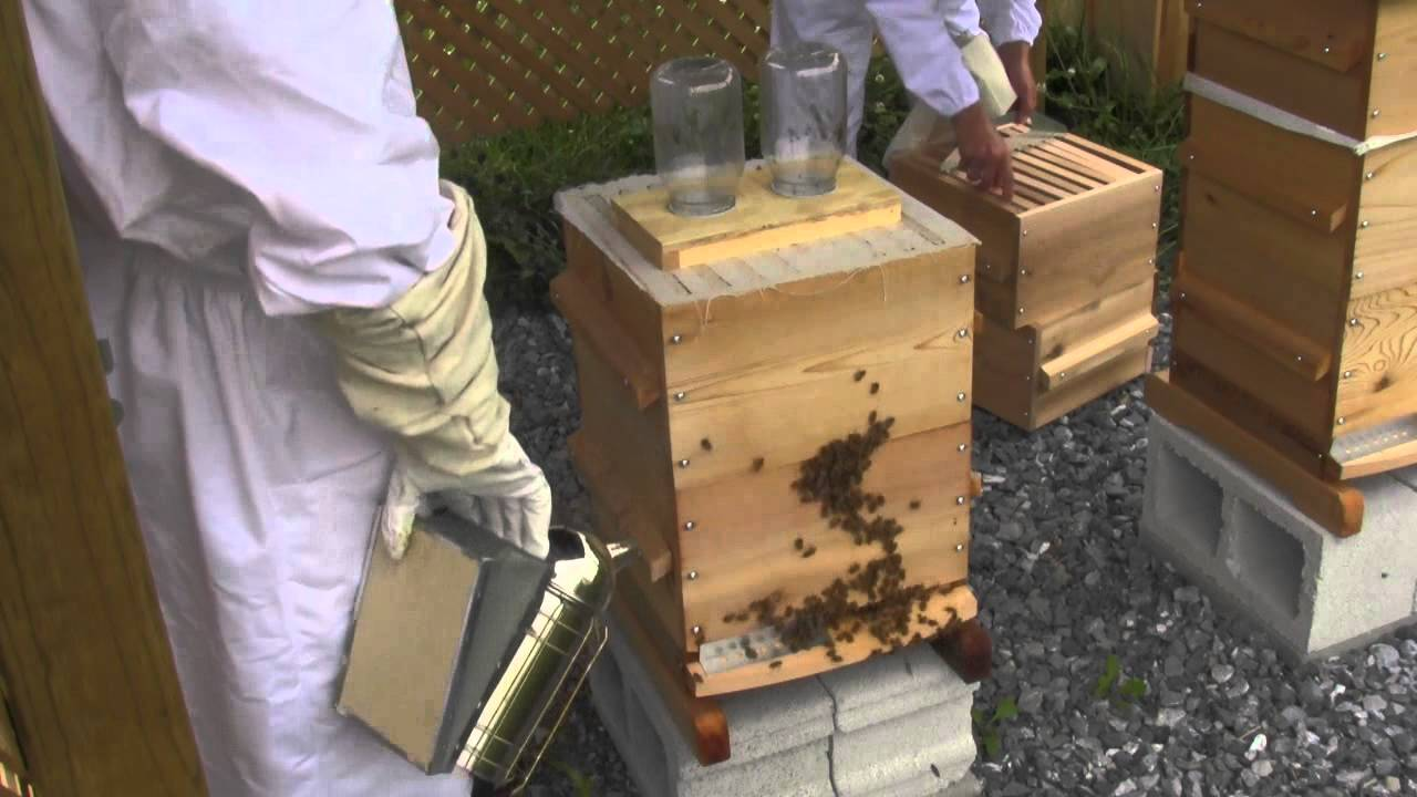 Features of the Warre Hive