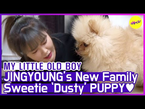 [HOT CLIPS] [MY LITTLE OLD BOY]   Sweetie Puppy 💓 JINYOUNG (ENG SUB)
