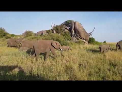 Serengeti - taki sobie spacerek